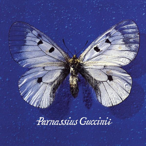 Copertina Disco Vinile 33 giri Parnassius Guccinii di Francesco Guccini